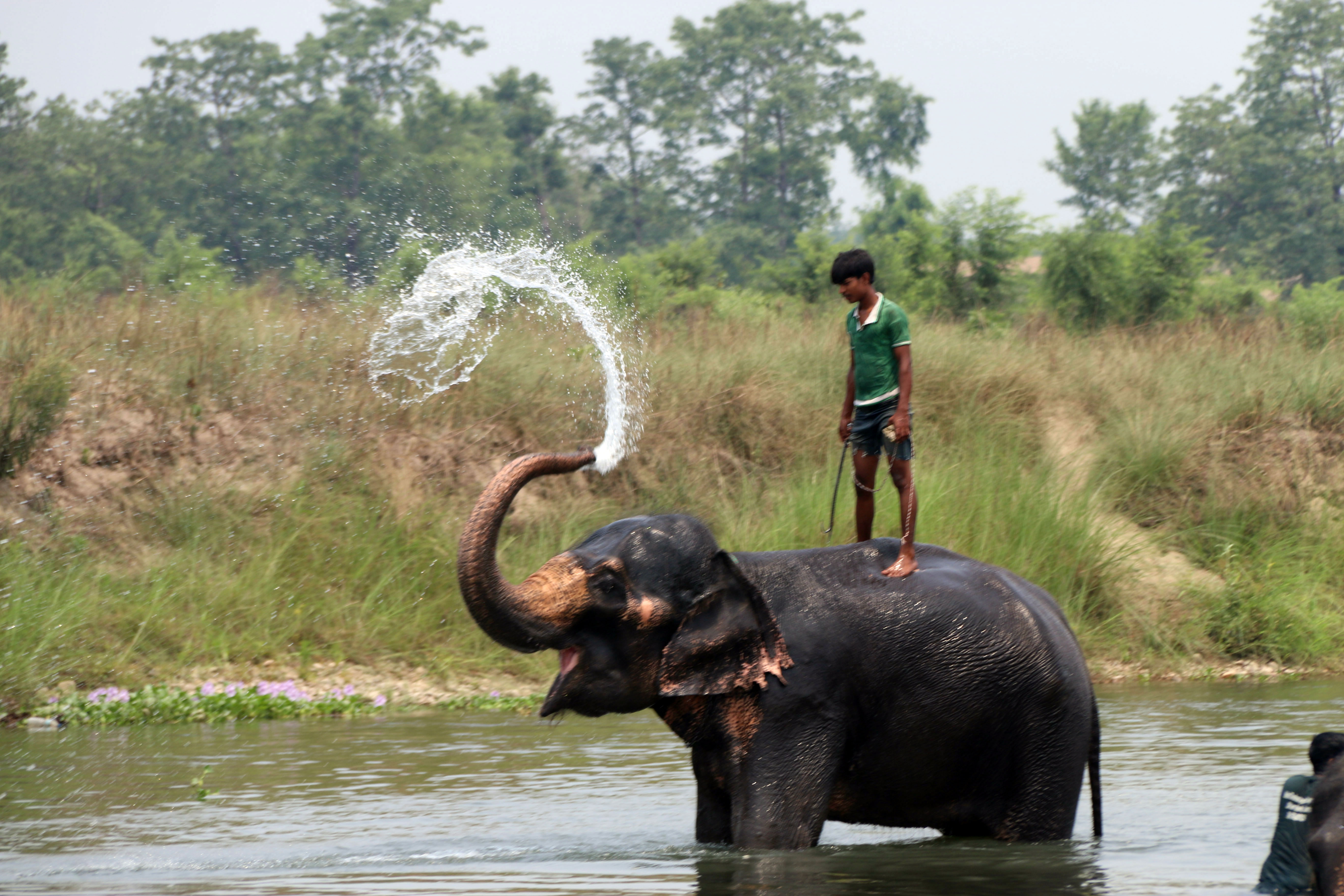 Elephant Bathing in Rapti River which lies in bank of Chitwan National Park
