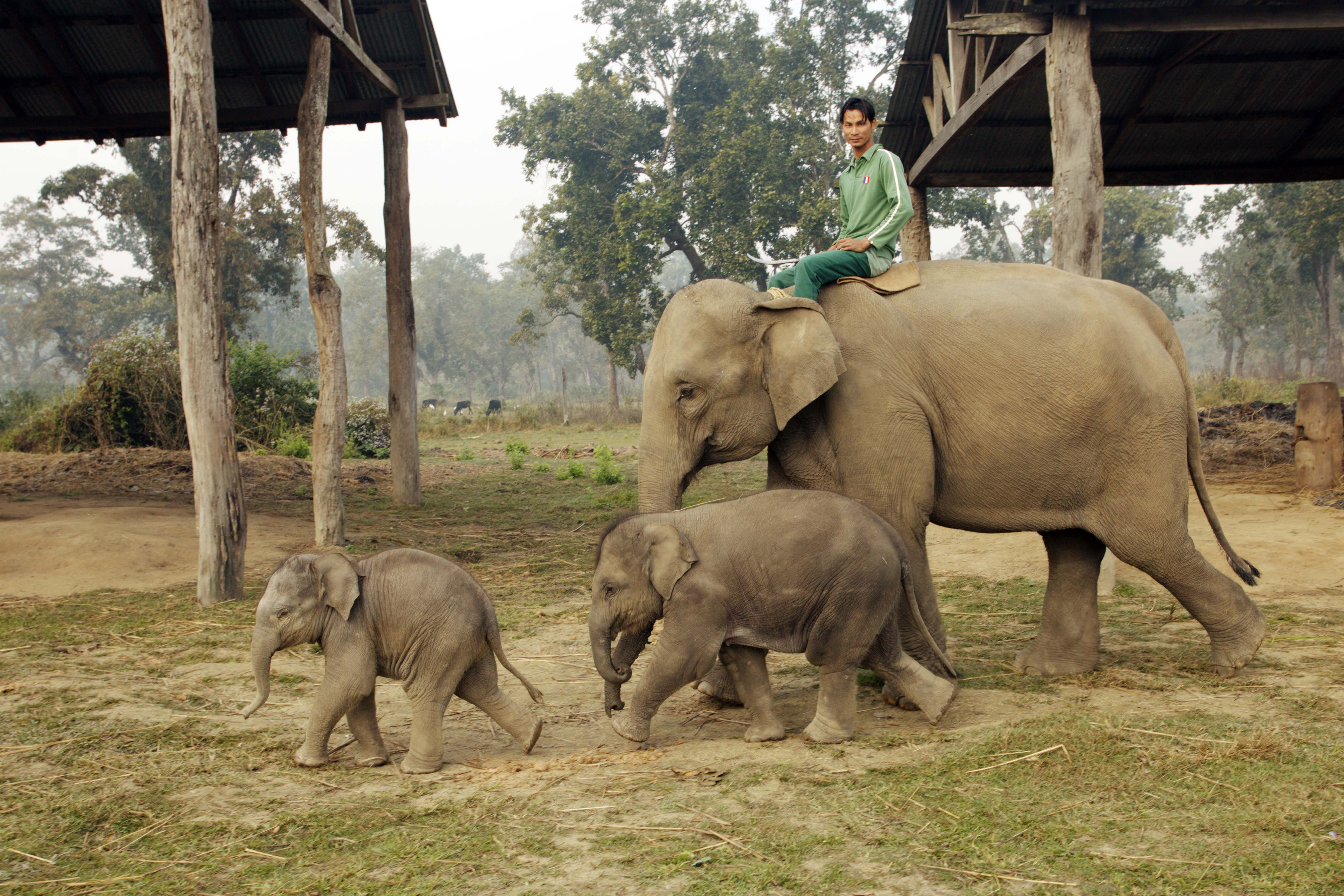 Elephant Breeding Center in Chitwan National Park