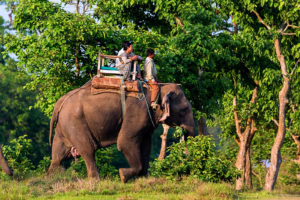 Thing to do in Chitwan National Park