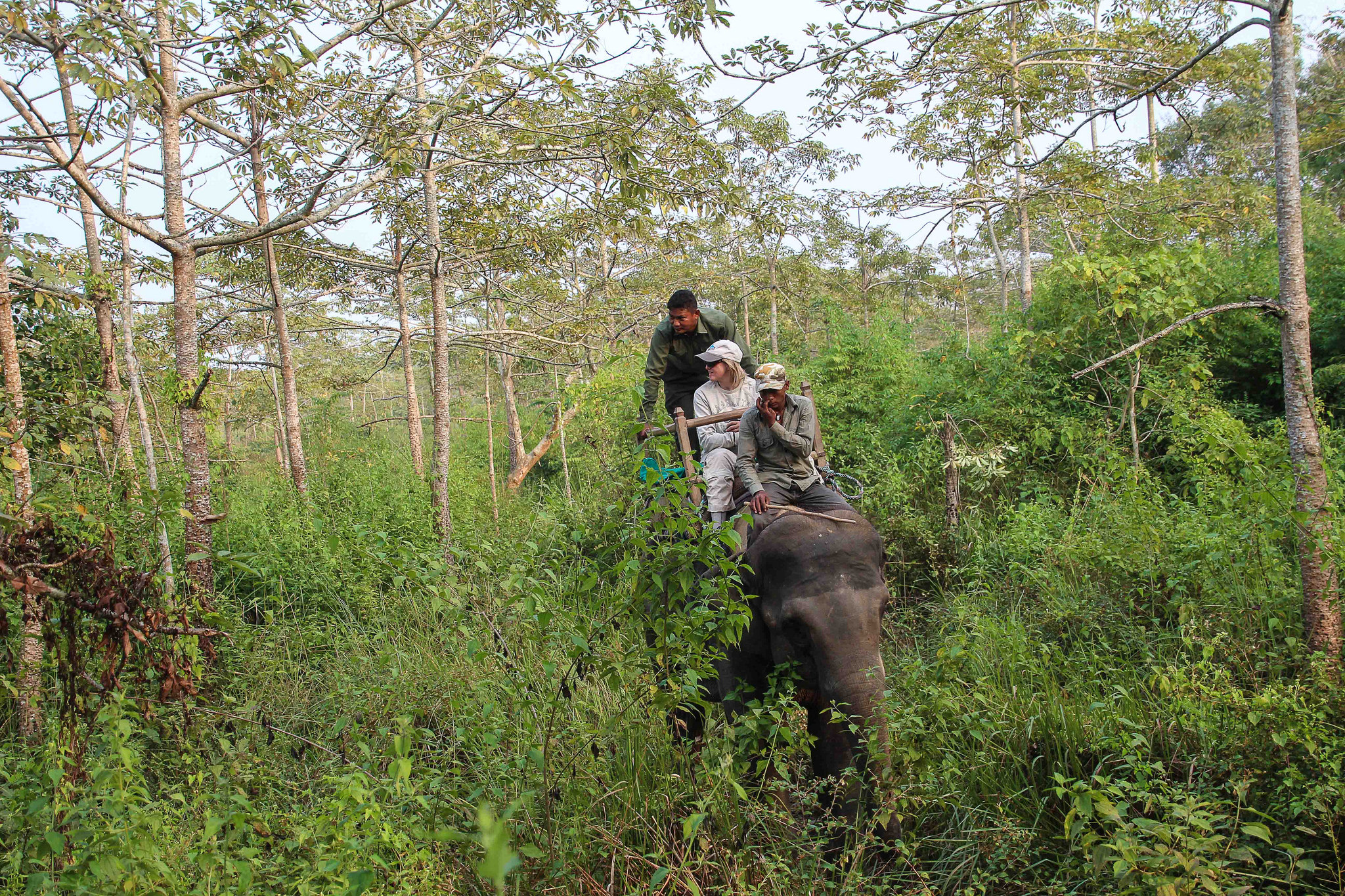 Elephant Safari Chitwan