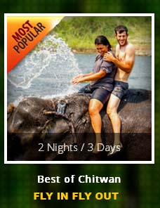 2-nights-3-days-package-fly-in-fly-out-chitwan