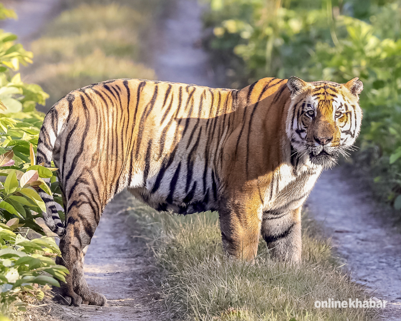 wildlife tiger and national park Special wildlife tours to bandhavgarh national park with attractive price get best deals on various customized bandhavgarh wildlife packages.