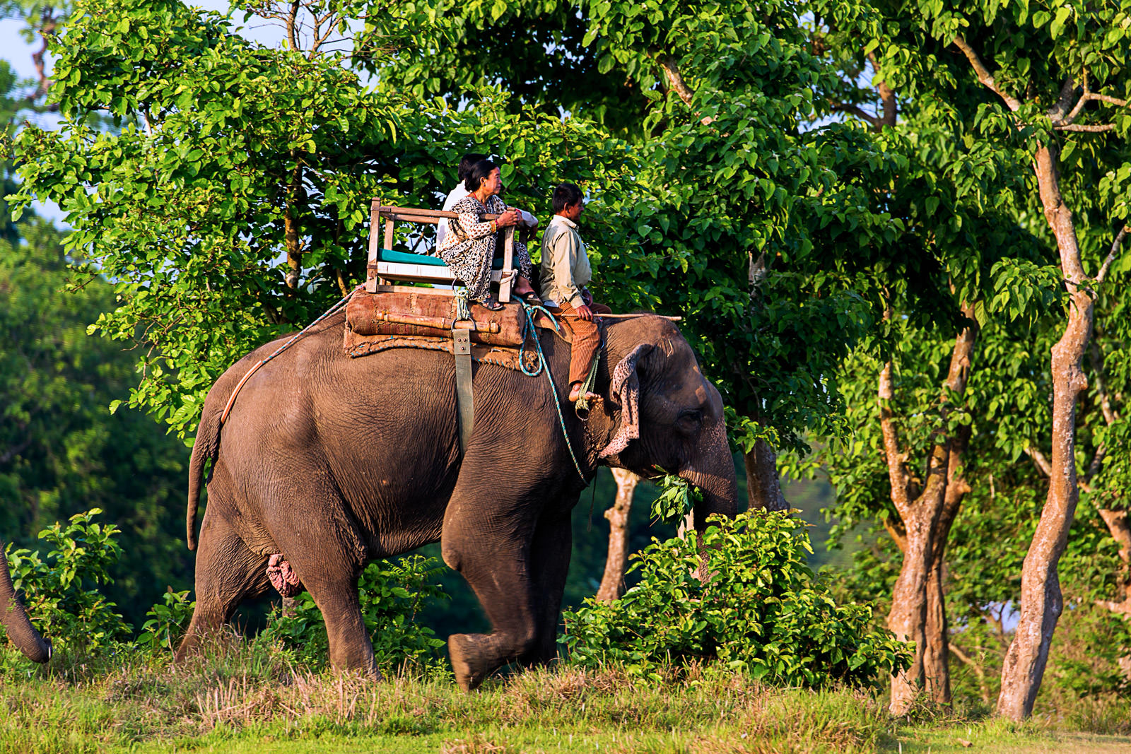 Sauraha Package for Nepali