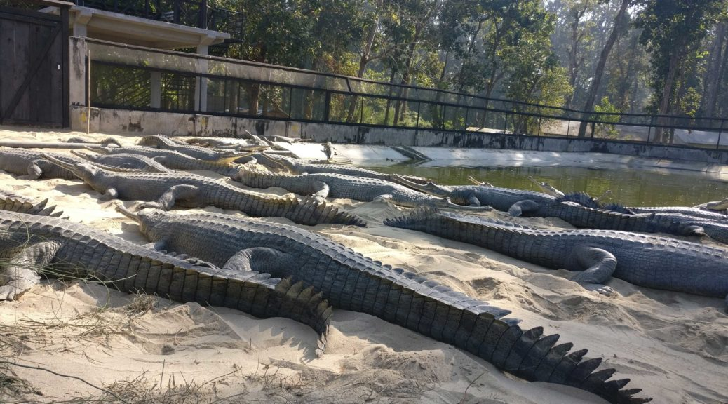 Chitwan National Park Tour Packages