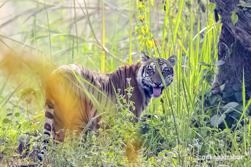 What to expect from Jeep Safari inside Chitwan National Park?