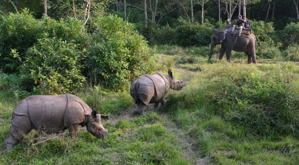 Jungle Safari Tour Package Nepal